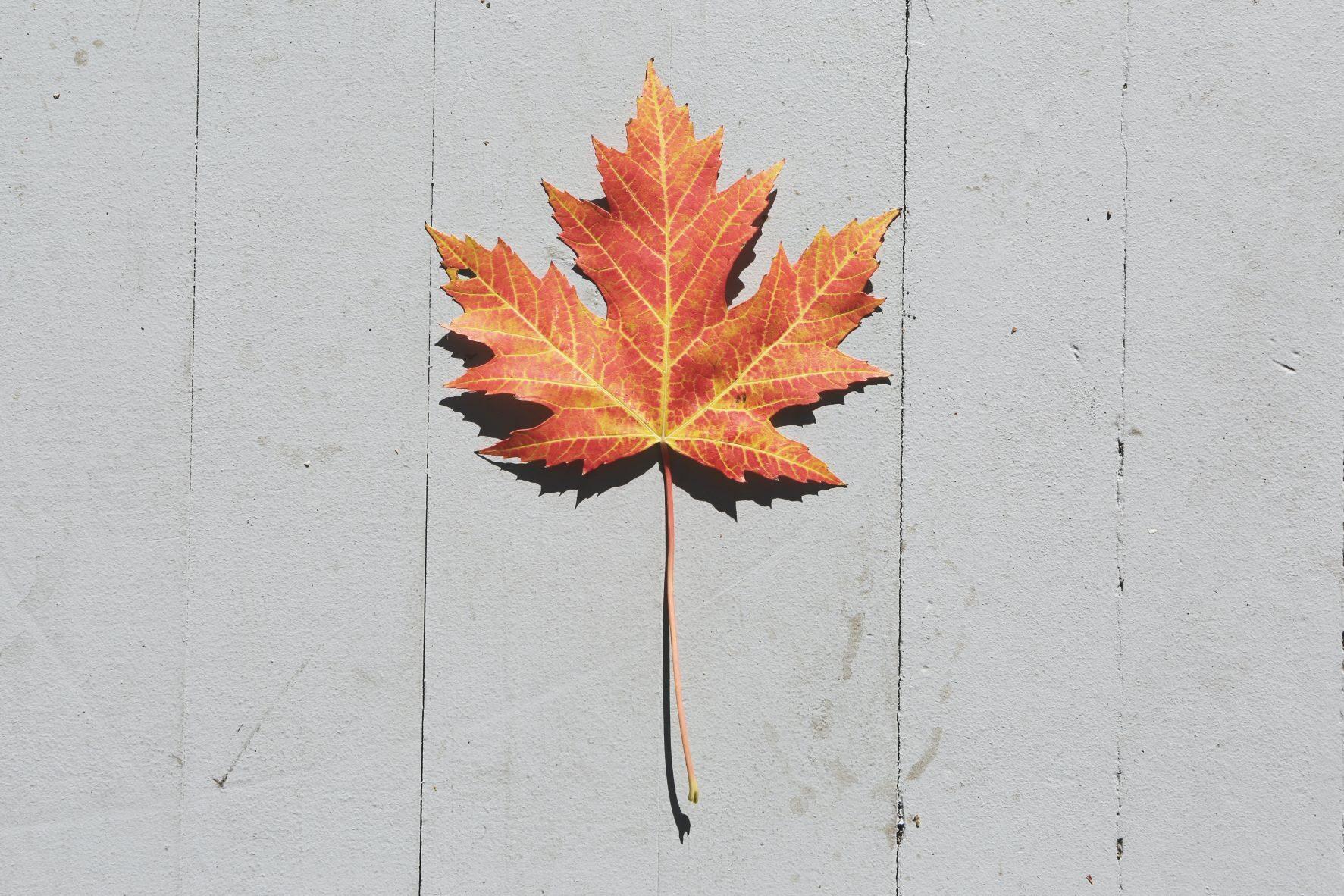 Veritext Canada